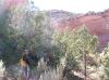 ruby-horsethief-2010-13_1030x770